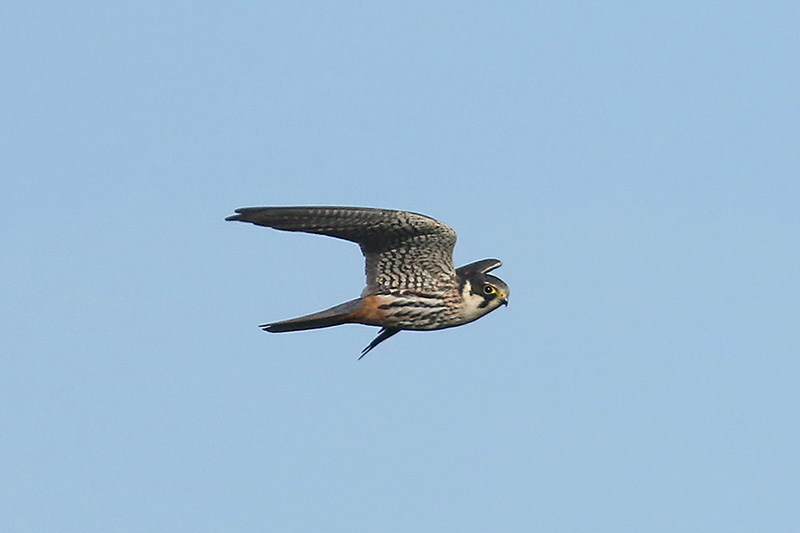 Hobby by Mick Dryden