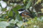 Cape Batis by Mick Dryden
