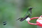 Booted Racquet-tail by Mick Dryden